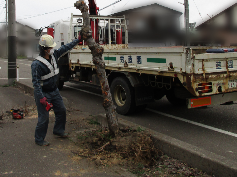 街路樹復旧工事